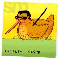 Wesleysnipe